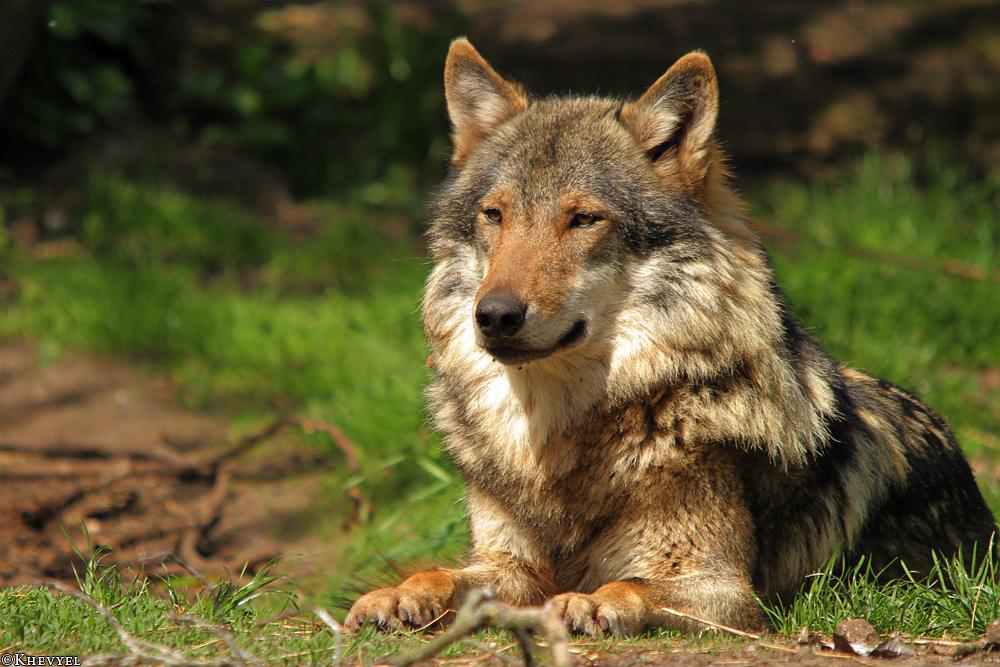 Nordhorn1305Kati_Romulus-28