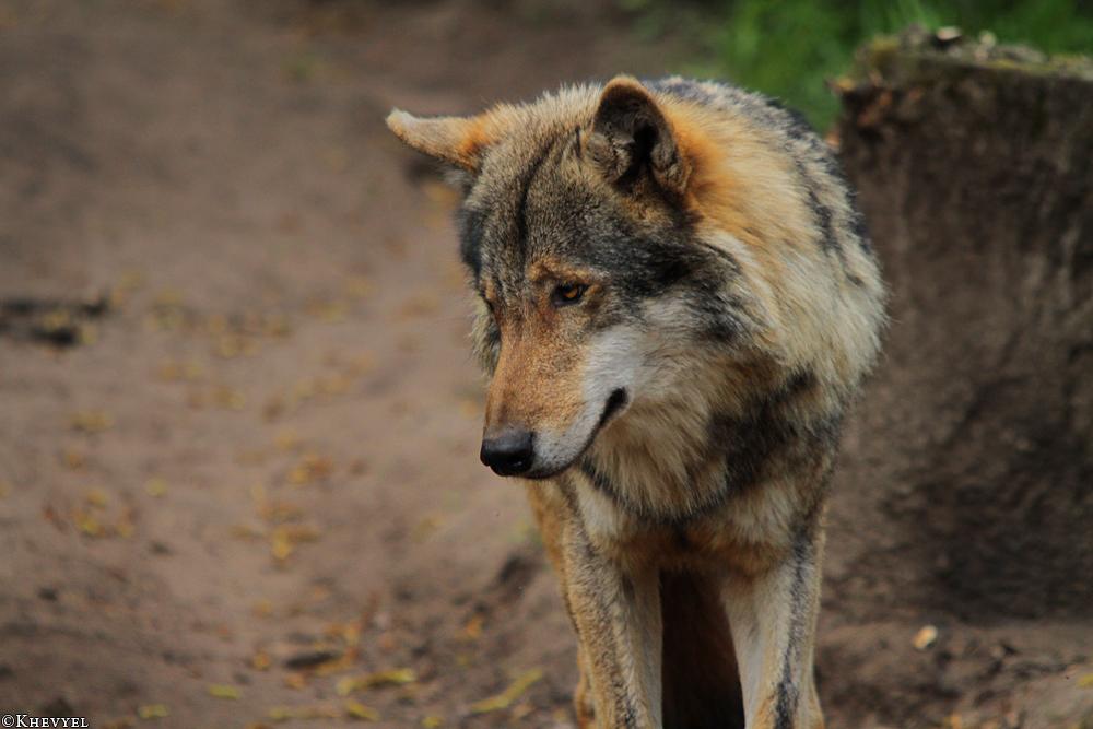 Nordhorn1305Kati_Romulus-33