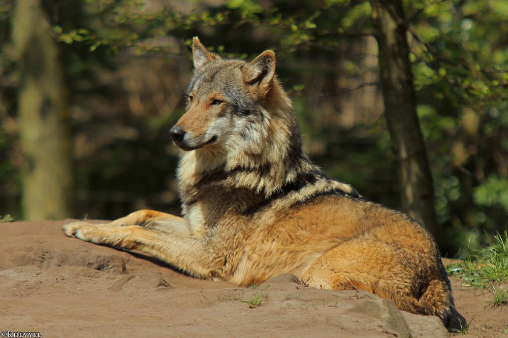 Nordhorn1305Kati_Romulus-46