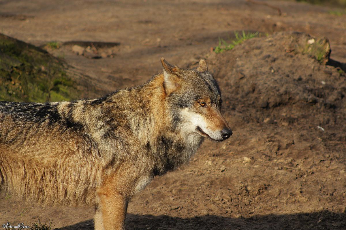 Nordhorn1402Jessi_Romulus-01