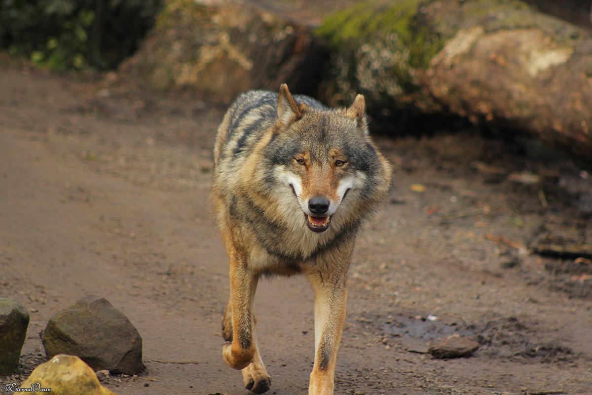 Nordhorn1402Jessi_Romulus-05