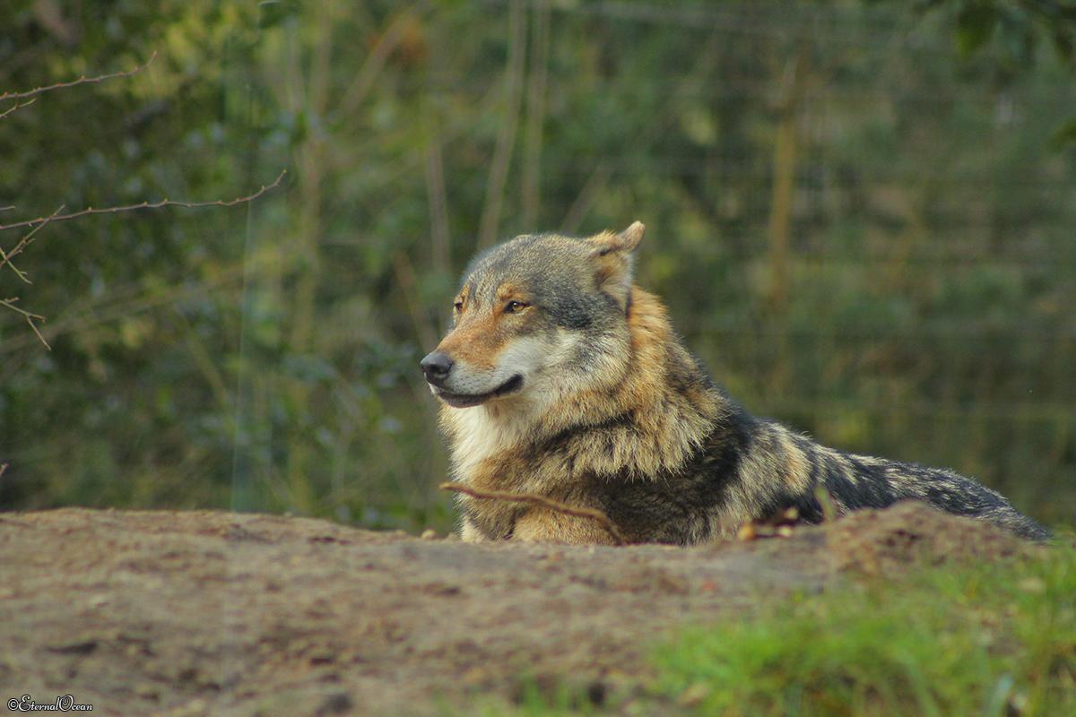 Nordhorn1402Jessi_Romulus-08