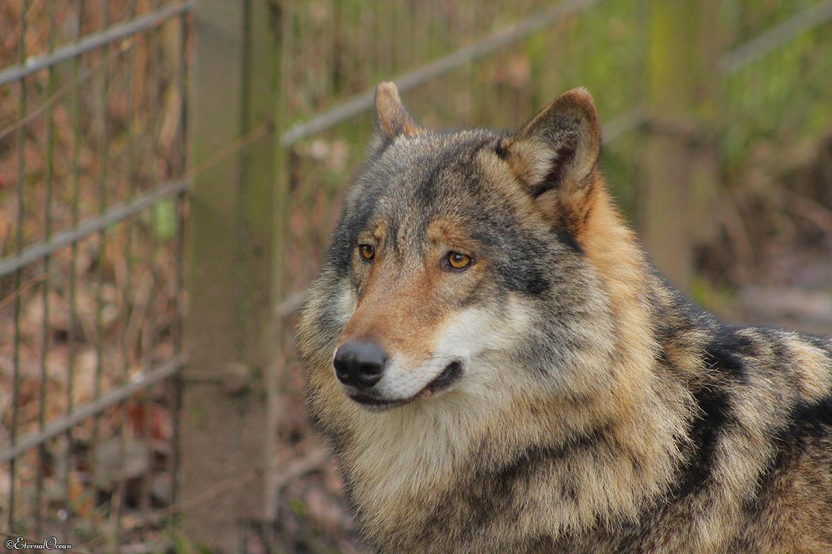 Nordhorn1402Jessi_Romulus-10