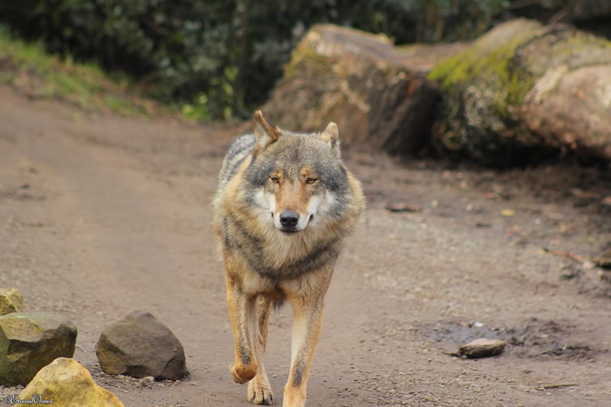 Nordhorn1402Jessi_Romulus-12
