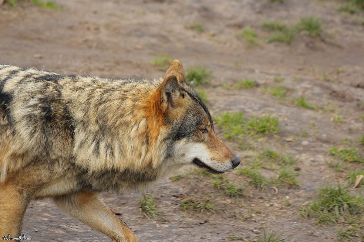 Nordhorn1402Jessi_Romulus-13