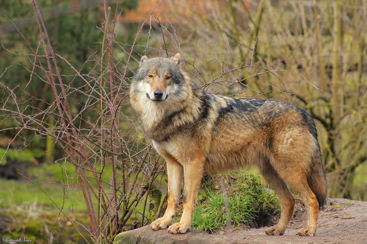 Nordhorn1402Jessi_Romulus-22