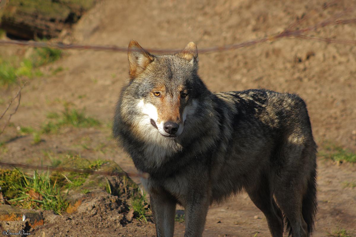 Nordhorn1402Jessi_Romulus-31