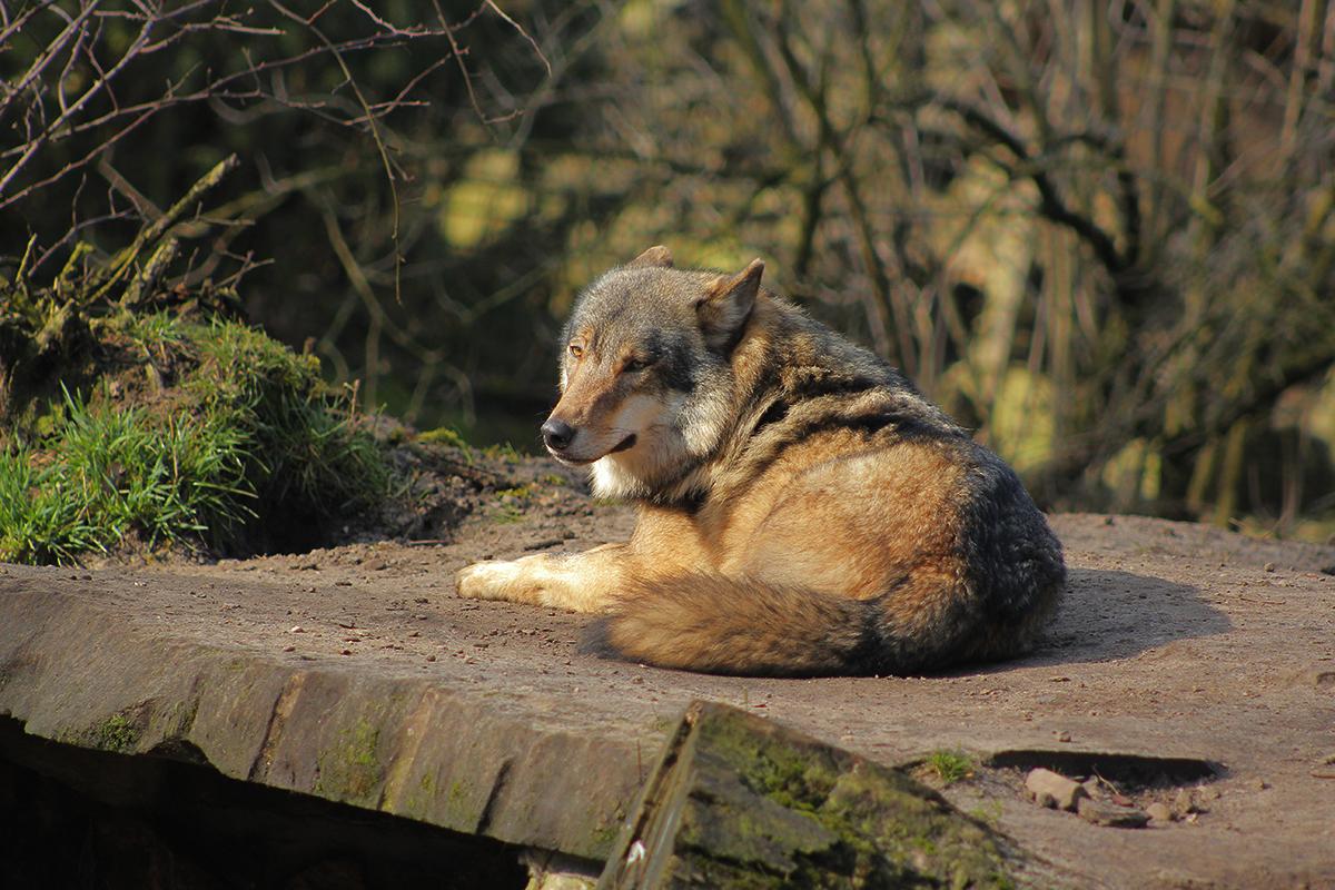 Nordhorn1402Jessi_Romulus-34