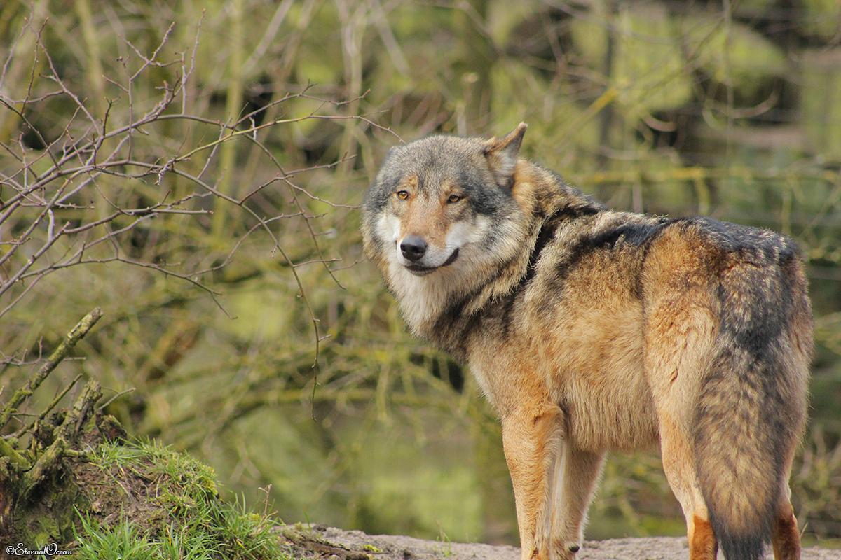 Nordhorn1402Jessi_Romulus-42
