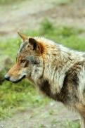 Nordhorn1206Kati_Romulus-24