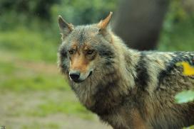 Nordhorn1206Kati_Romulus-45