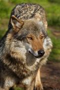 Nordhorn1305Kati_Romulus-10