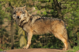 Nordhorn1305Kati_Romulus-23