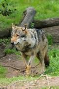 Nordhorn1305Kati_Romulus-25