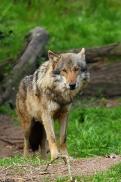 Nordhorn1305Kati_Romulus-26
