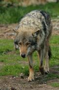 Nordhorn1305Kati_Romulus-31