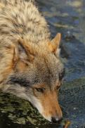 Nordhorn1305Kati_Romulus-36