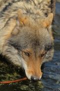 Nordhorn1305Kati_Romulus-37
