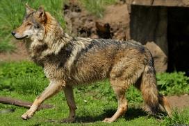 Nordhorn1305Kati_Romulus-41