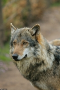 Nordhorn1305Kati_Romulus-45