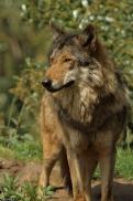 Nordhorn1305Kati_Romulus-48