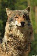 Nordhorn1305Kati_Romulus-51
