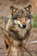 Nordhorn1402Kati_Romulus-06