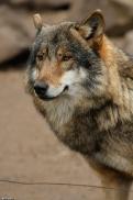 Nordhorn1402Kati_Romulus-19