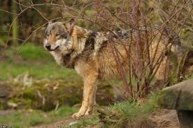 Nordhorn1402Kati_Romulus-20