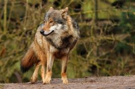 Nordhorn1402Kati_Romulus-22