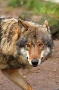 Nordhorn1402Kati_Romulus-25