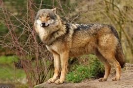 Nordhorn1402Kati_Romulus-26