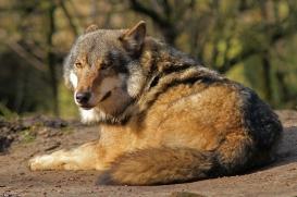 Nordhorn1402Kati_Romulus-31