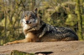 Nordhorn1402Kati_Romulus-33
