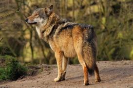 Nordhorn1402Kati_Romulus-36