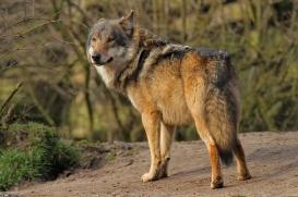 Nordhorn1402Kati_Romulus-37