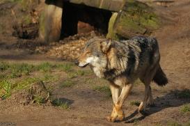 Nordhorn1402Jessi_Romulus-03