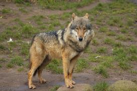 Nordhorn1402Jessi_Romulus-14