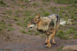 Nordhorn1402Jessi_Romulus-15