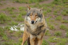 Nordhorn1402Jessi_Romulus-18