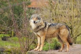 Nordhorn1402Jessi_Romulus-21