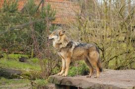Nordhorn1402Jessi_Romulus-23