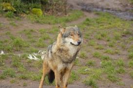 Nordhorn1402Jessi_Romulus-24