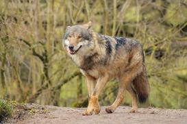 Nordhorn1402Jessi_Romulus-25
