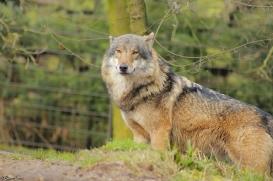 Nordhorn1402Jessi_Romulus-26