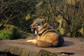 Nordhorn1402Jessi_Romulus-33