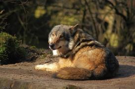 Nordhorn1402Jessi_Romulus-35