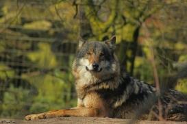 Nordhorn1402Jessi_Romulus-36