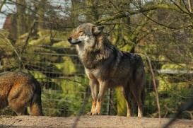 Nordhorn1402Jessi_Romulus-37