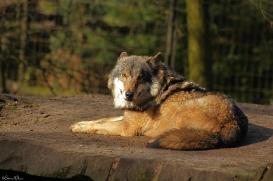 Nordhorn1402Jessi_Romulus-38